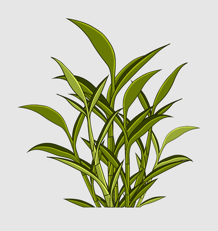 traditional chinese medicine: Fresh Green Leaves Elements Illustration