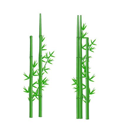 green bamboo: Green Bamboo Vector