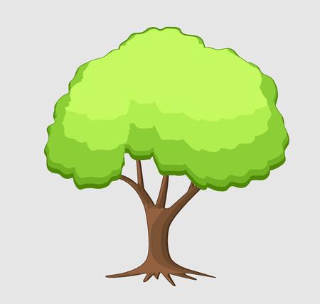 bonsai: Pine Bonsai
