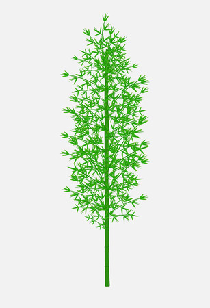 Bamboo Tree Branches Vector Illustration