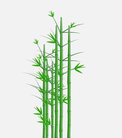 asian gardening: Bamboo Vector