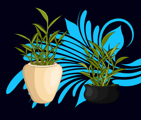 traditional chinese medicine: Lucky Bamboo Pots Vector