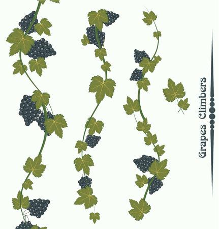 climbers: Grapes Climbers Vector Illustration