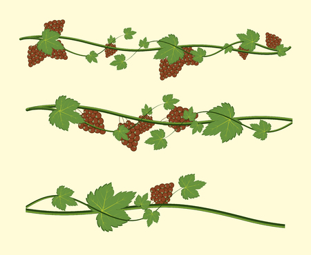 grapes on vine: Grapes Vine Elements