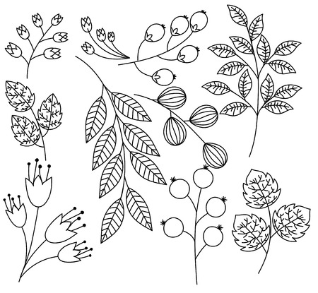twigs: Hand Drawn Leaves Branches and Twigs Vector Set