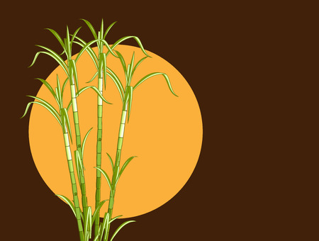 sugarcane: Sugarcane Vector Background