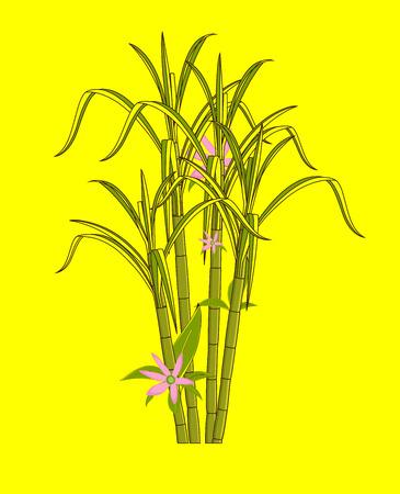 sugarcane: Flowers Blooming on Sugarcane Sticks