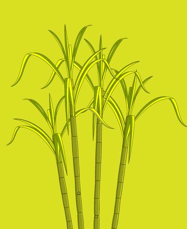 sugarcane: Growing Sugarcane Plant Vector Illustration