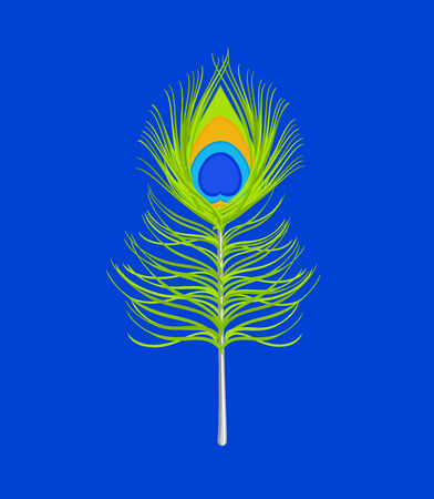 krishna: Peacock Feather Isolated on Blue Background