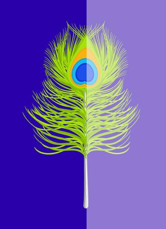 feather vector: Peacock Feather Vector