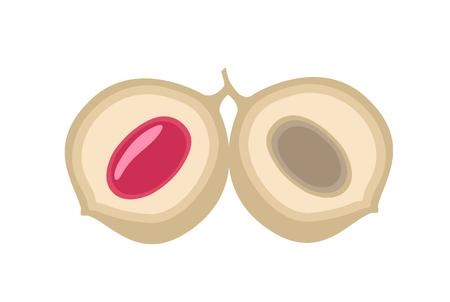 Peach Fruit Slices Vector
