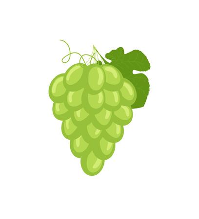 bunch: Grapes Bunch Vector