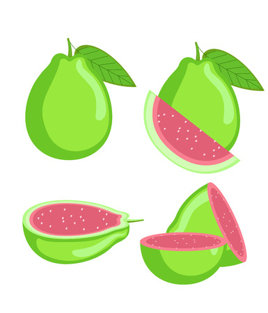 Guava Slices Vector