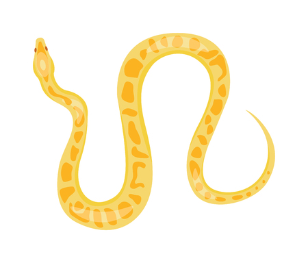 boa: Python reticulated albino boa snake constrictor wildlife nature snake vector illustration. Boa snake wildlife nature animal and exotic boa gold snake. Attack crawling predator danger snake. Illustration