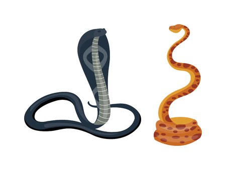 Cobra Snake coiled and ready to showing danger reptile animal wildlife cartoon vector. Snake cobra wildlife danger poisonous asia scary snake dangerous viper. Illustration