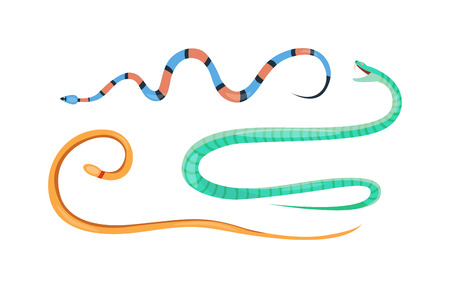 reptile: Snake character wildlife nature viper. Flat snake python symbol, venom predator snake toxic reptile. Cartoon snake danger tongue poisonous. Common viper snake wild danger reptile vector.