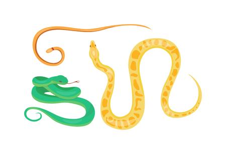 Snake character wildlife nature viper. Flat snake python symbol, venom predator snake toxic reptile. Cartoon snake danger tongue poisonous. Common viper snake wild danger reptile vector.