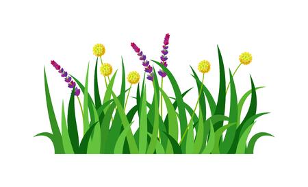 grass roots: Green grass showing roots. Green grass with earth crosscut. Grass earth green, nature, background and green nature grass with earth. Ground dirt spring garden texture concept grow agriculture.
