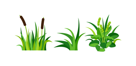 turf flowers: Green grass showing roots. Green grass with earth crosscut. Grass earth green, nature, background and green nature grass with earth. Ground dirt spring garden texture concept grow agriculture.