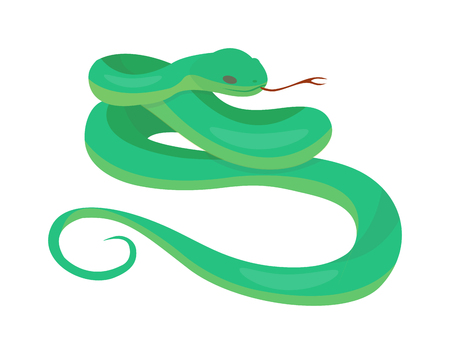 constrictor: Python reticulated albino boa snake constrictor wildlife nature snake vector illustration. Boa snake wildlife nature animal and exotic boa gold snake. Attack crawling predator danger snake. Illustration