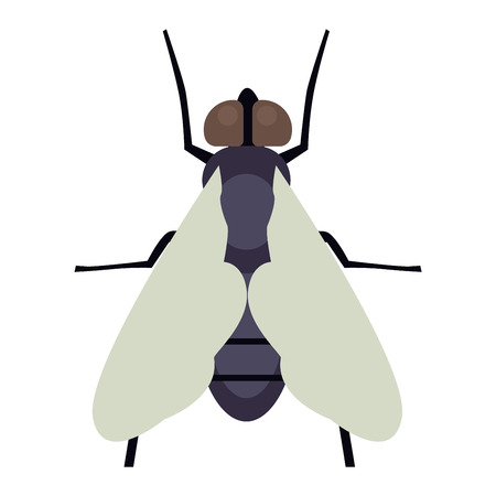 hum: House fly insect and cartoon black fly insect. Insect hairy legs biology housefly. Bluebottle fly insect species calliphora vomitoria bug animal nature macro pest with big eyes hairy legs flat vector. Illustration