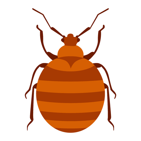 zoology: Beetle bug insect isolated on white background vector wildlife animal vector bug. Nature water beetle and zoology water beetle bug. Wildlife insect water black beetle ecology detail.