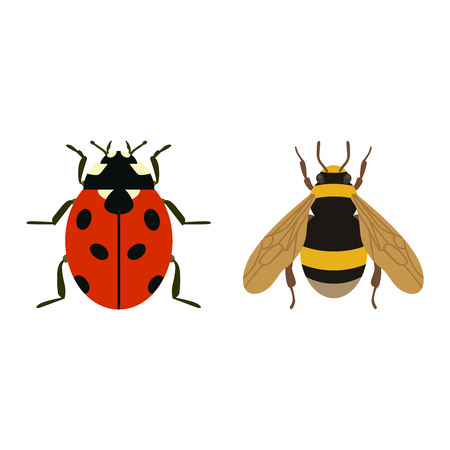 housefly: House fly insect and cartoon black fly insect. Insect hairy legs biology housefly. Bluebottle fly insect species calliphora vomitoria bug animal nature macro pest with big eyes hairy legs flat vector. Illustration