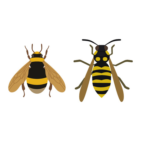 an insect sting: Cartoon bee and sweet yellow bee. Summer worker bug, honey bee antenna. Worker bumblebee sting busy bee insect. European western honey yellow bee nature wing fly insect sweet Illustration