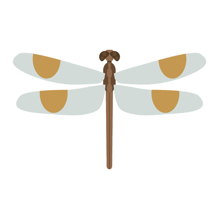 fragility: Cartoon dragonfly and flat blue dragonfly. Summer dragonfly beautiful fragility damselfly. Dragonfly anax imperator male blue emperor with big eyes nature insect animal wildlife vector illustration.