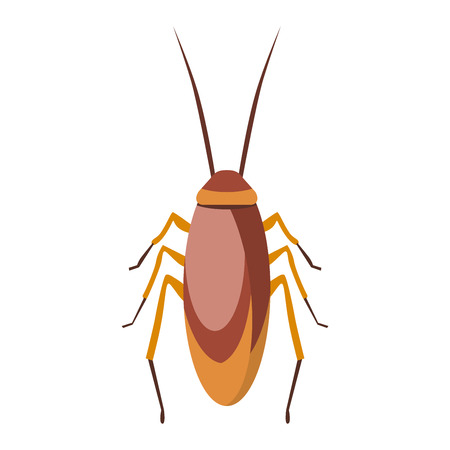 Cockroach infestation urban and health control cockroach. Bad creepy creature head cockroach, disgust hairy cockroach. Cockroach dirty broun pest and disgusting roach Illustration