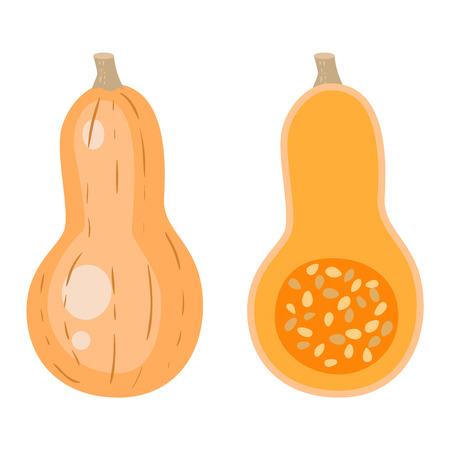 oriental season: Autumn pumpkin element design, pumpkins oriental bittersweet vector illustration. Pumpkin icon vegetable. Harvest symbol season decoration.