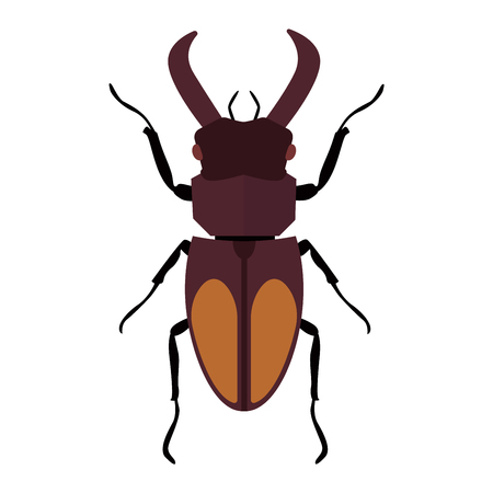 coleoptera: Beetle bug insect isolated on white background vector wildlife animal vector bug. Nature water beetle and zoology water beetle bug. Wildlife insect water black beetle ecology detail.