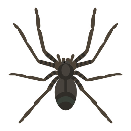 phobia: Spider silhouette arachnid fear graphic and spider flat silhouette scary, animal poisonous design. Spider silhouette nature phobia. Spider insect danger silhouette vector icon.