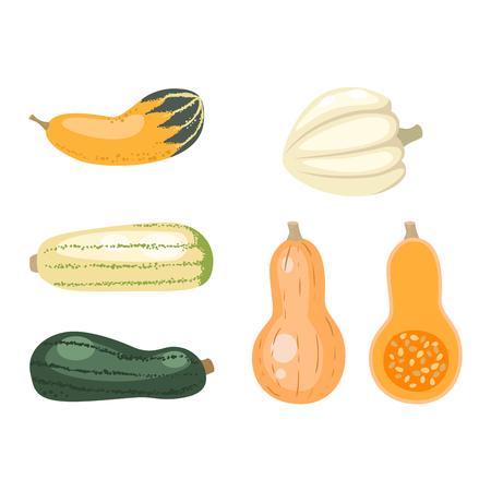 Najaarscollectie van pompoen set elementen te ontwerpen met verschillende pompoenen Oosterse bitterzoete vector illustratie. Oranje Halloween pompoen set plantaardige collectie. Harvest symbool seizoen decoratie.