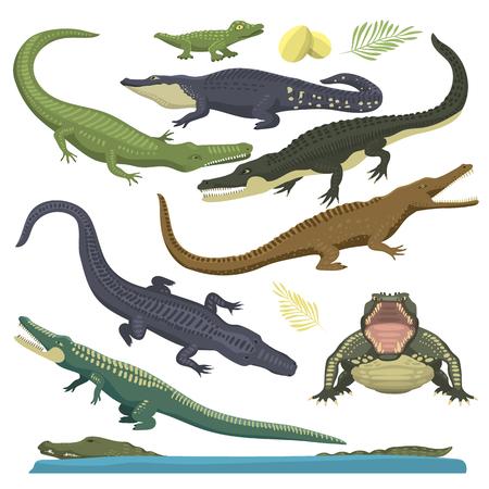 reptile: Cartoon green crocodile reptile flat vector illustration. and australian wildlife green crocodile reptile danger predator flat vector. Cartoon green crocodile reptile cartoon flat vector illustration