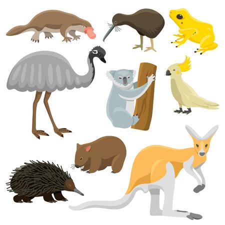 australian animals: Australia wild animals cartoon vector collection. Australia popular animals like crocodile, koala, kangaroo and koala. Australian animals nature flat style vector Illustration