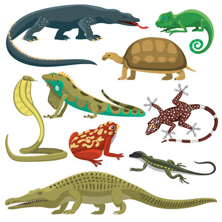 Reptile and amphibian in front of white background. Colorful fauna illustration snake predator reptiles animals. Reptiles animals crocodile silhouette collection exotic cartoon set. Vettoriali