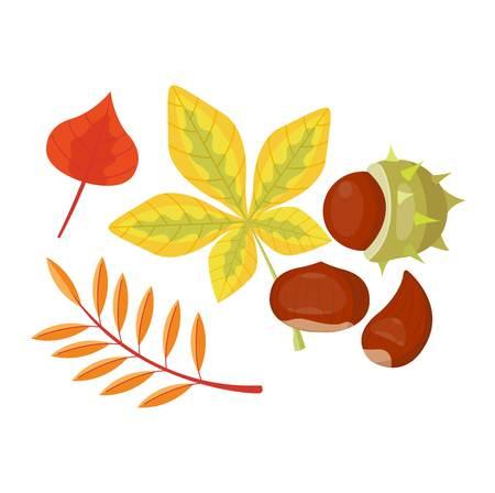 season: autumn leaf on white background. Autumn leaf autumn season and nature color plant foliage. Yellow autumn leaf bright decoration and design natural season colorful flat leaf.