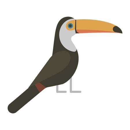 Cartoon toucan bird and toucan wild animal birds. Tropical parrot toucan feather zoo birds tropical fauna macaw flying ara. Various cartoon exotic bird toucan illustration vector