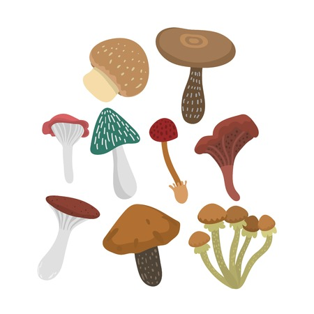 poisonous: Mushrooms vector illustration set. Different types of mushrooms isolated on white background. Nature mushrooms for cook food and poisonous mushrooms flat style