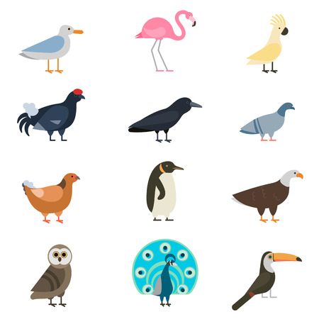 Birds vector set. Birds illustration. Egle and parrot. Pigeon and toucan. Bird collection. Penguins, flamingos. Crows and peacocks. Black grouse, chicken. Birds collection vector bird