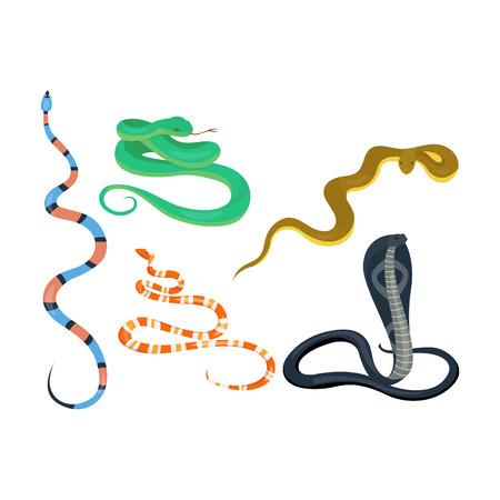 Snake character wildlife nature viper. Flat python symbol venom predator toxic animal. Cartoon danger tongue poisonous. Common reptile vector set illustration.