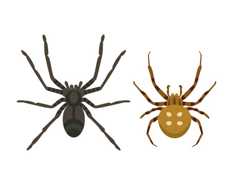 Spider silhouette arachnid fear graphic flat scary animal poisonous design nature phobia insect danger horror tarantula halloween vector icon.
