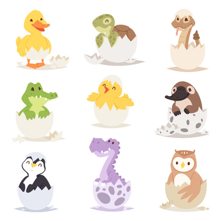 Cute new born animals in eggs easter farm holiday creature little life and young shell small pet nature birthday adorable wildlife poultry tiny character vector illustration. Illustration