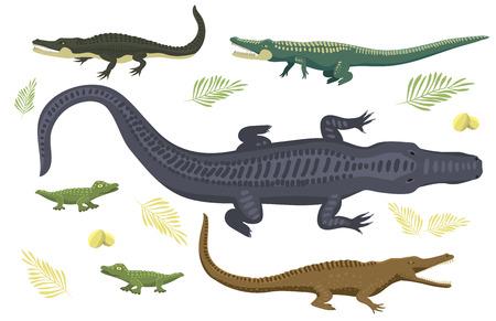Cartoon green crocodile danger predator and australian wildlife river reptile carnivore.