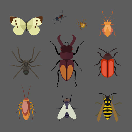 Insect icon flat isolated nature flying butterfly beetle ant and wildlife spider grasshopper or mosquito cockroach animal biology graphic vector illustration.