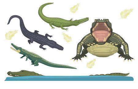 alligator isolated: Cartoon green crocodile danger predator and australian wildlife river reptile carnivore alligator with scales teeth flat vector illustration.