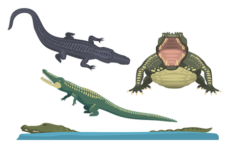 scaly: Cartoon green crocodile danger predator and australian wildlife river reptile carnivore alligator with scales teeth flat vector illustration.