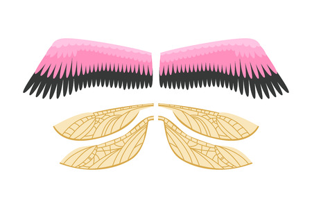 Wings isolated animal feather pinion bird freedom flight and natural hawk life peace design flying element eagle winged side shapevector illustration.