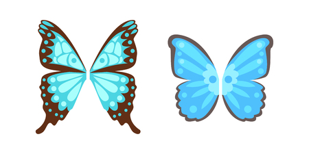 Wings butterfly isolated animal feather pinion blue freedom flight and natural hawk life peace design flying element eagle winged side shapevector illustration.